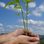 PNL y la Ecología Personal-Parte 1